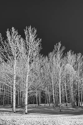 Photograph - Arizona Aspens - Infrared by Michael Yeager