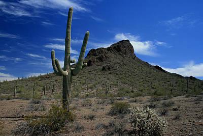 Arizona Cacti   Art Print by Scott Cunningham