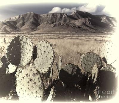 Arizona Dry Prickly Pear Art Print by Henry Kowalski