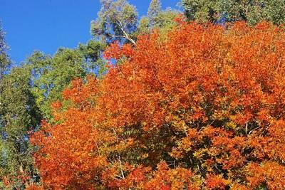 Photograph - Arizona Fall 3 by David Rizzo