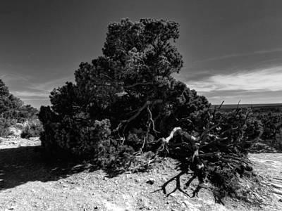 Photograph - Arizona - Grand Canyon 010 by Lance Vaughn