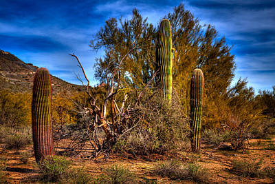 Arizona Landscape II Art Print by David Patterson
