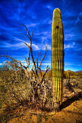 Photograph - Arizona Landscape IIi by David Patterson