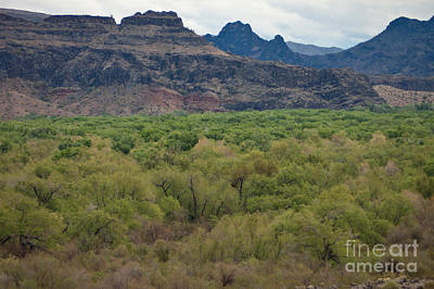 Mesquite Tree Photograph - Arizona Landscape by Richard and Ellen Thane