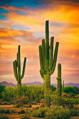 Photograph - Arizona Life by James BO Insogna