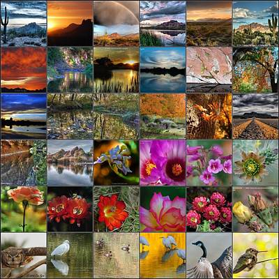 Photograph - Arizona Mosaic by Tam Ryan