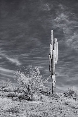 Photograph - Arizona Saguaro by Michael Yeager