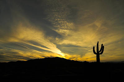 Photograph - Arizona Sunset by Dan Wells