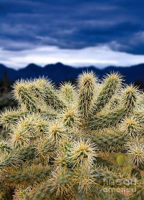 Arizona Teddy Bear Cactus Art Print
