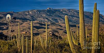 Rincon Mountains Wall Art - Photograph - Arizona Thirst For Water by Henry Kowalski