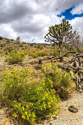 Arizona Wildflowers And Joshua Trees Art Print by Willie Harper
