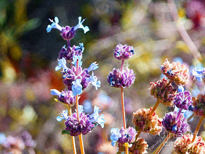 Photograph - Arizona Wildflowers by Methune Hively