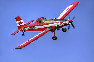 Arkansas Razorbacks Air Tractor Print by Jason Politte