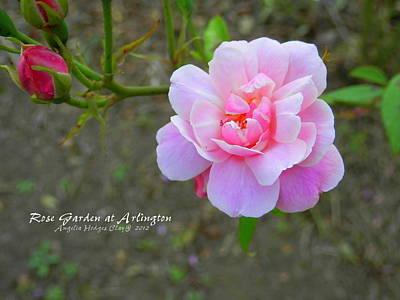 Digital Art - Arlington Rose by Angelia Hodges Clay