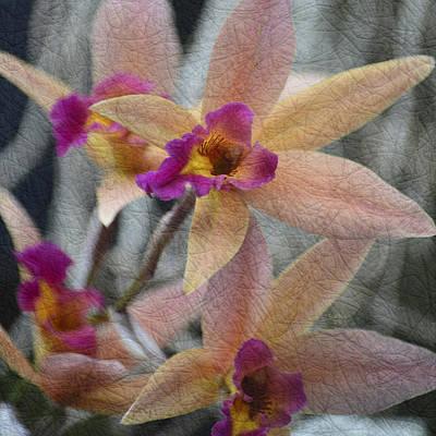 Orchids Mixed Media - Armando Travajoli by Trish Tritz