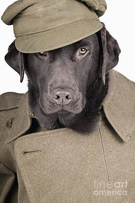 Humanlike Photograph - Army Dog by Justin Paget