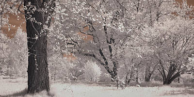 Photograph - Arnold Arboretum In Infrared by Joann Vitali