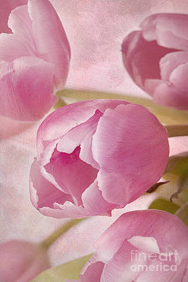 Aroma D'amor Art Print by A New Focus Photography
