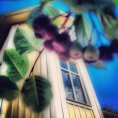 Music Photograph - #aronia #buske #trädgård #hus #hem by Carina Ro