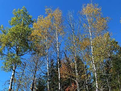 Photograph - Aroostook Autumn 1 by Gene Cyr