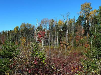 Photograph - Aroostook Autumn 2 by Gene Cyr