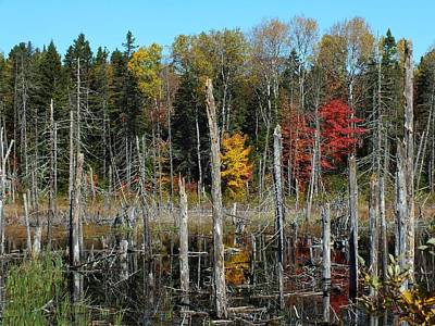 Photograph - Aroostook Autumn 4 by Gene Cyr