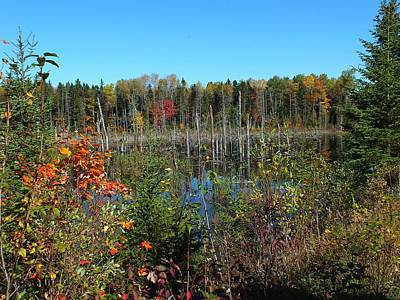 Photograph - Aroostook Autumn 5 by Gene Cyr