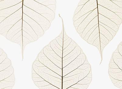 Arranged Leaves Art Print by Kelly Redinger
