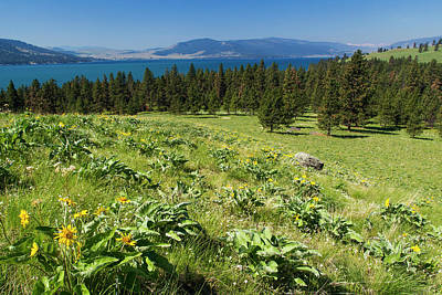 Montana State Parks Photograph - Arrowleaf Balsamroot Blooming On Wild by Chuck Haney