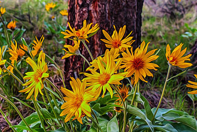 Arrowleaf Balsamroot Art Print