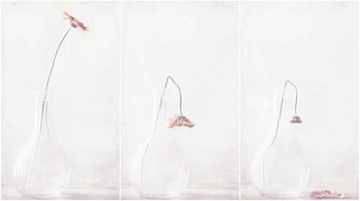 Triptych Photograph - Ars Longa, Vita Brevis... by Delphine Devos