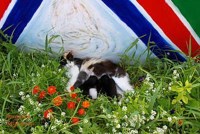 Photograph - Flowers And Cats by Augusta Stylianou