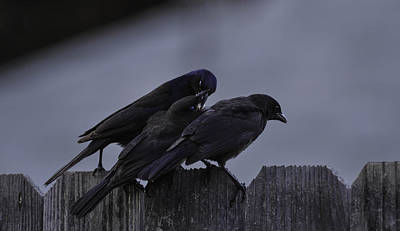 Photograph - Art And Mystics Of  Grackles 2/10 by Rae Ann  M Garrett