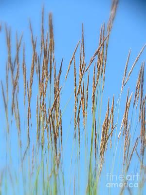 Photograph - Art Grass by France Laliberte