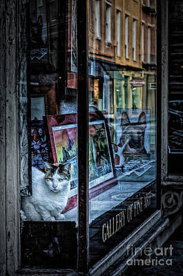 Photograph - Art Guard Kitty by Kathleen K Parker