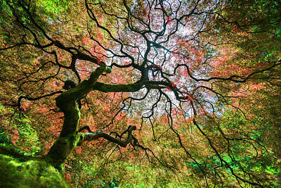Maple Trees Photograph - Arterial Tree by Garret Suhrie