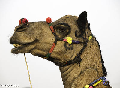 Photograph - Artful Camel by Fran Gallogly