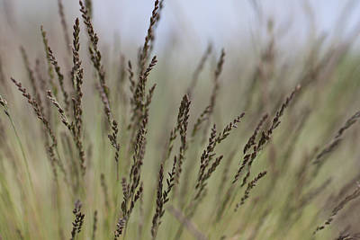 Photograph - Artful Dance Of Shoreline Grasses by Jeff Folger