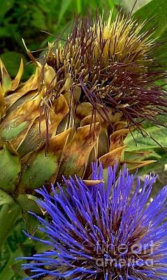 Photograph - Artichoke And Blossom  by Michael Hoard