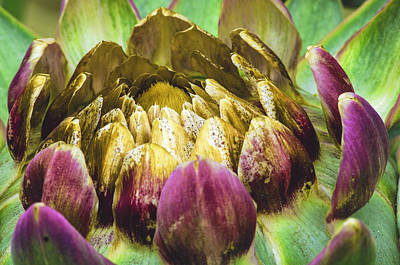 Photograph - Artichoke Bloom by Marta Cavazos-Hernandez