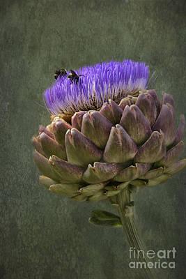 Photograph - Artichoke Bloom And Bee Dip by Belinda Greb