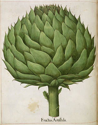 Artichoke Photograph - Artichoke by British Library