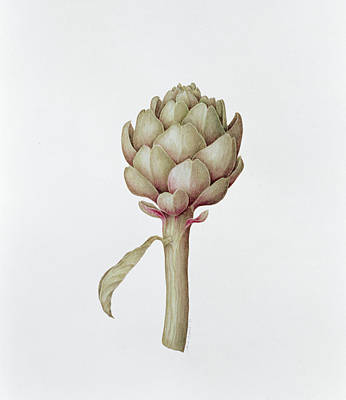 Negative Space Painting - Artichoke by Diana Everett