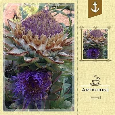 Restaurant Wall Art - Photograph - Artichoke In The Herb Garden by Anna Porter