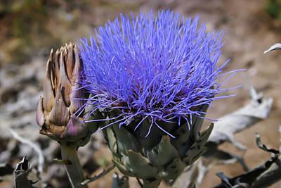 Photograph - Artichoke's Flower by Alfio Finocchiaro