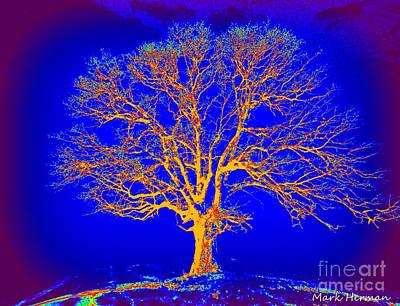 Painting - Artist Tree Glow by Mark Herman