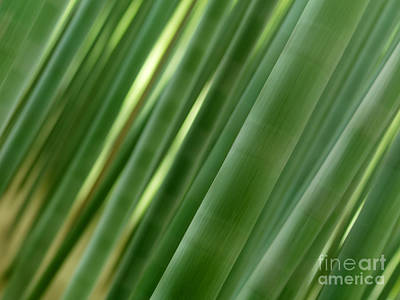 Artistic Abstract Of Bamboo Forest Culms Print by Oleksiy Maksymenko