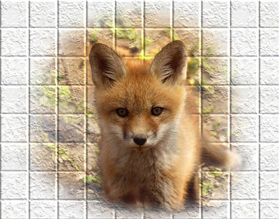 Artistic Cute Kit Fox Art Print by Thomas Young