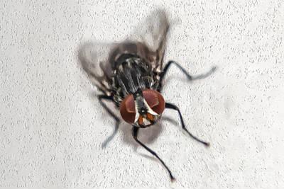 Oil Fly Art Print by Raul Davila