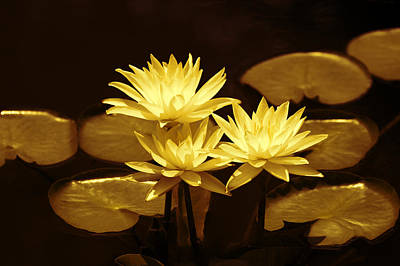 Artistic Gold Tone Water Lilies Art Print by Linda Phelps